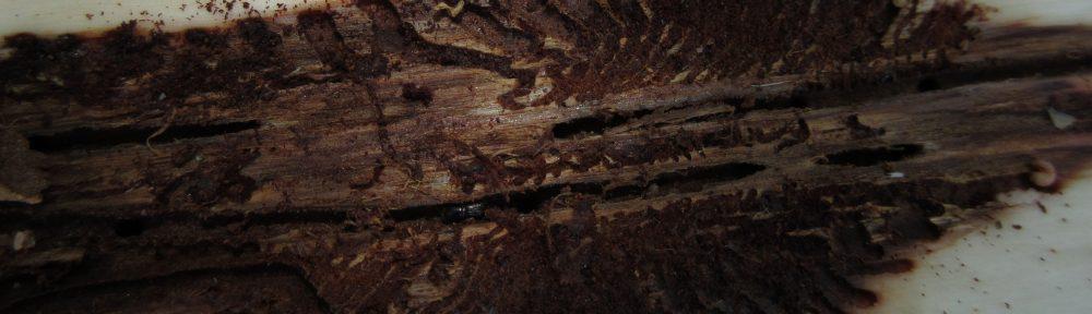 Izboljšanje sistema spremljanja ulova smrekovih podlubnikov